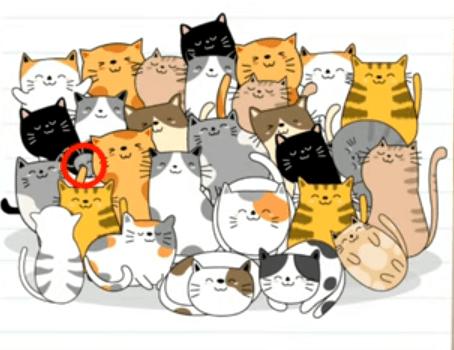 Braint Test Cevapları 27 Davetsiz Kedi