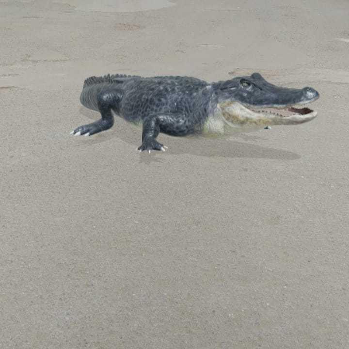 Aligator Timsah View in 3D