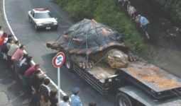 Kaplumbağa View in 3D (Google Kamera)